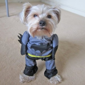 Superhero Costume For Your Pet Dog Cool Stuff To Buy And